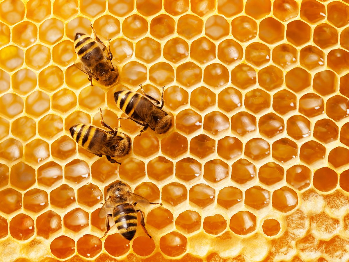 Good news - honeybees in Utrecht
