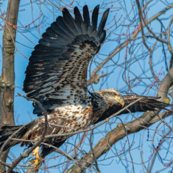 Close Encounters of a Feathered Kind: Great Canadian Bird Stories
