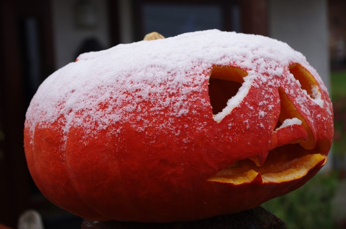 Pumpkin with frost on top