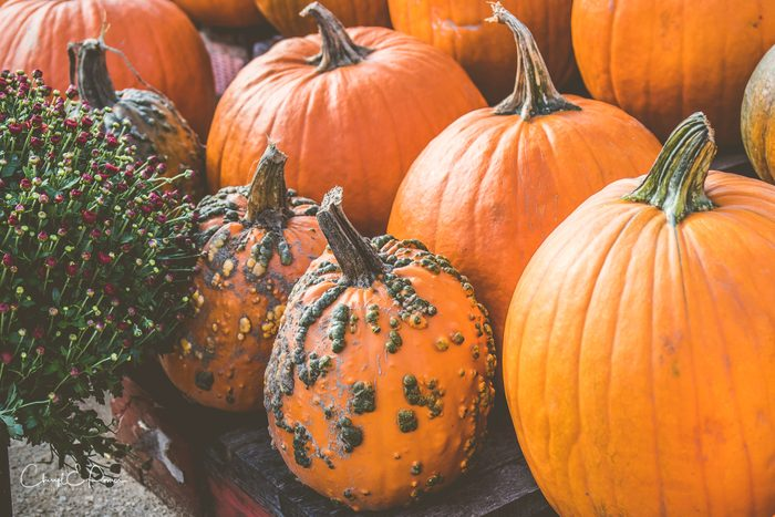 Pumpkins with warts on them