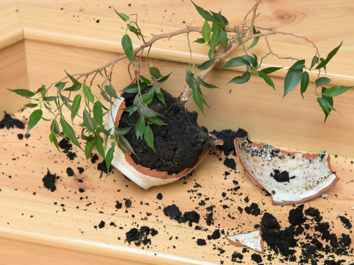 Soil from plant