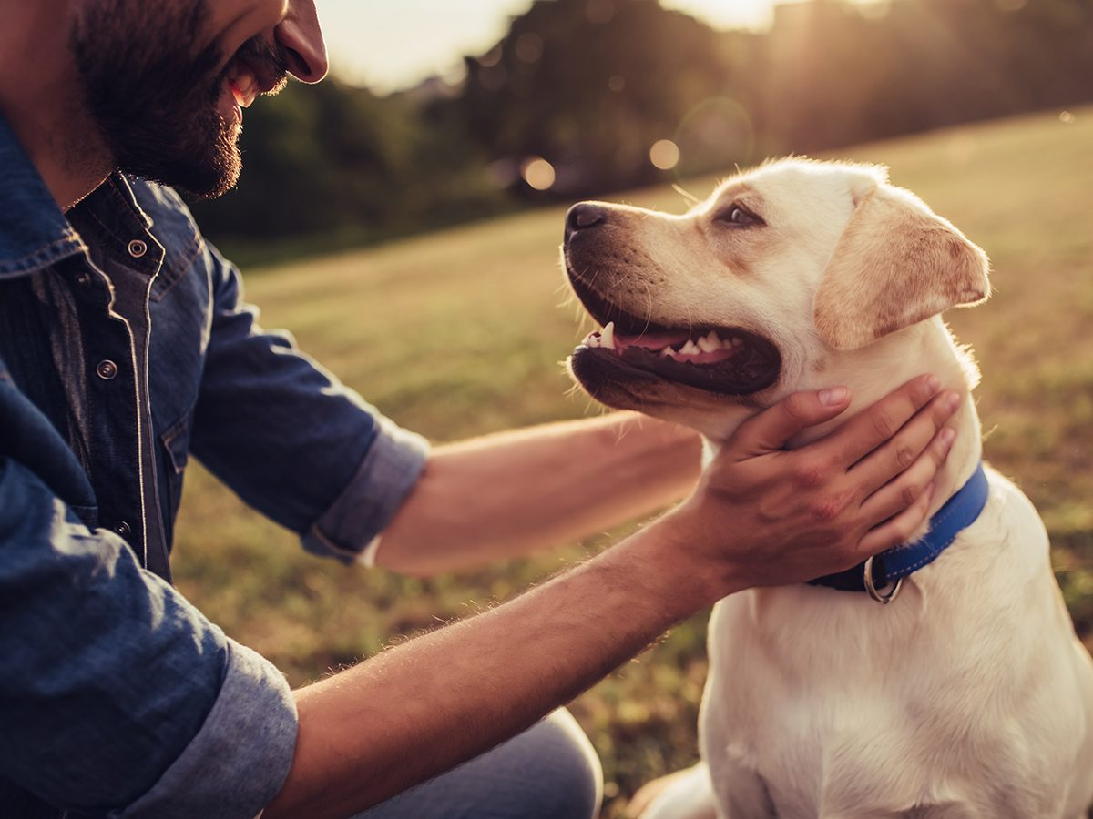 New health studies - dogs are good for your heart
