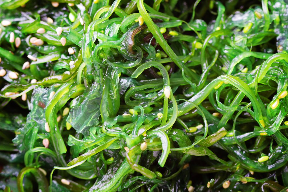 Wakame seaweed close up