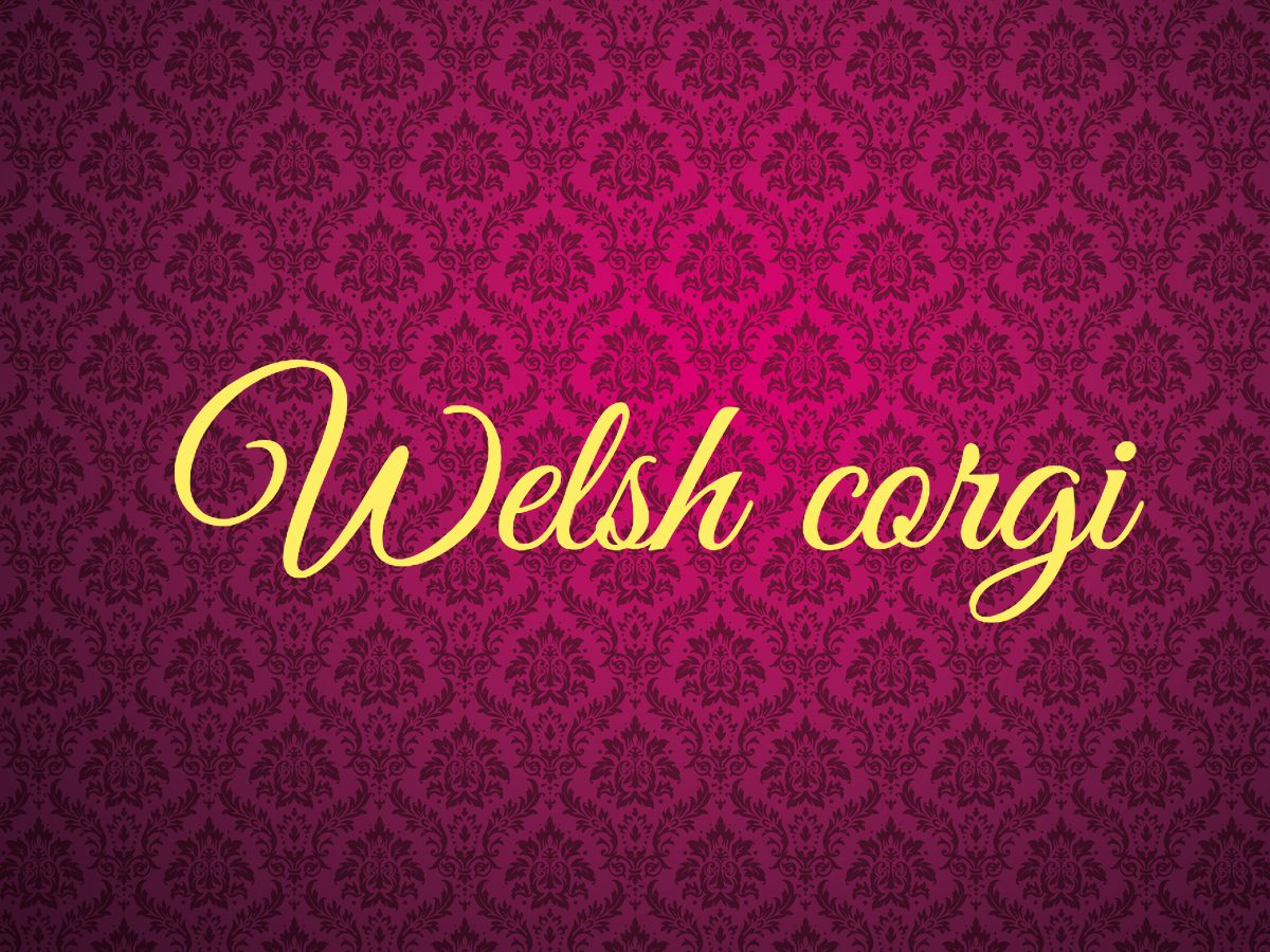 Welsh corgi - royal terms