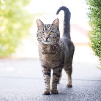 11 Secrets Your Cat's Tail Is Trying to Tell You