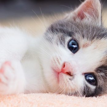 The 10 Best YouTube Cat Videos of All Time