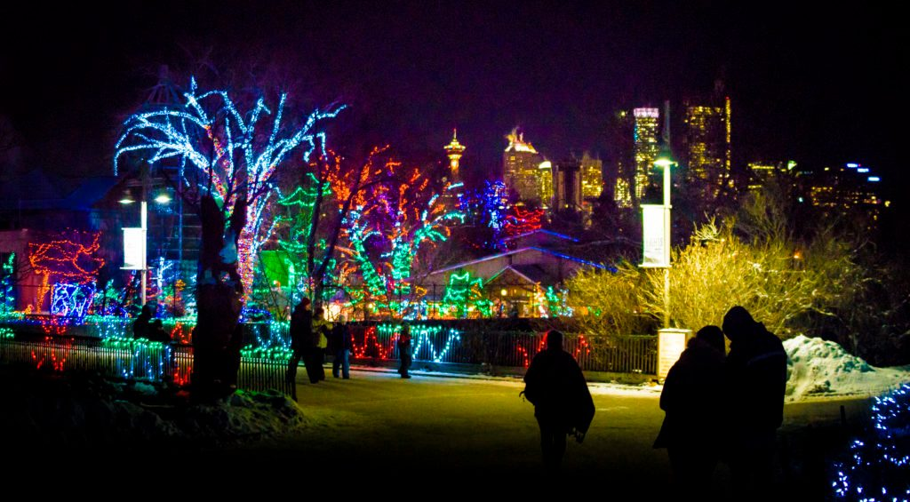 Trees with Christmas lights on them at the Calgary Zoo