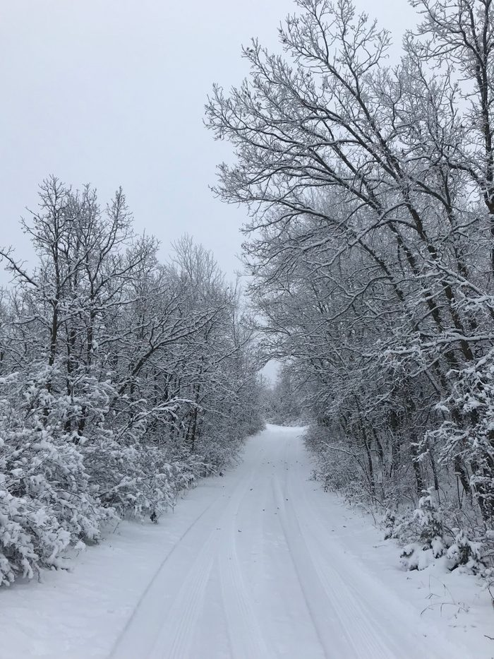 Snowy road with trees on either side