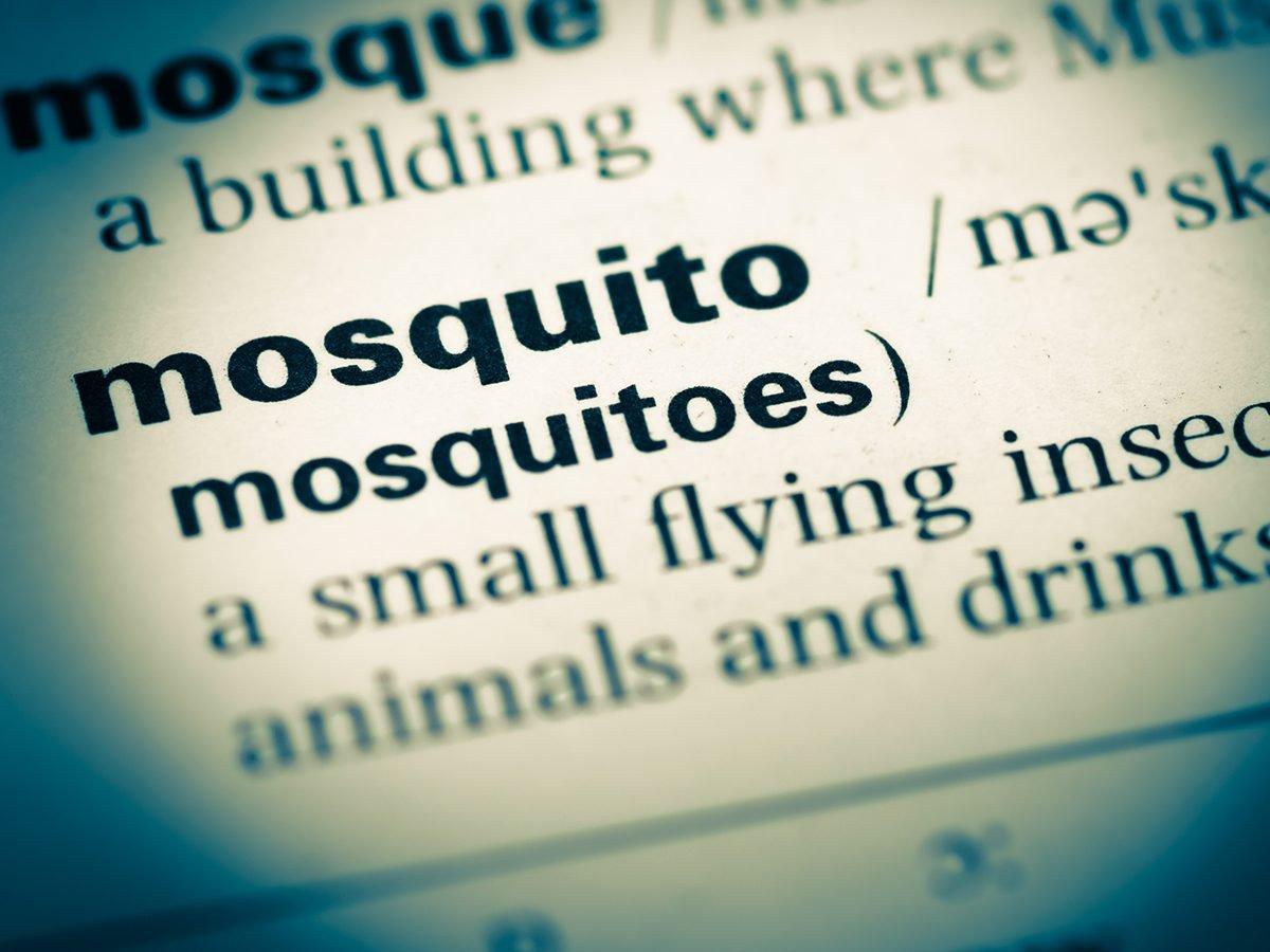 Funniest Readers Digest Jokes - Mosquito Spelling