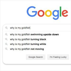 20 Funny Google Searches That Really Make You Wonder Who's Asking These Questions, Anyway