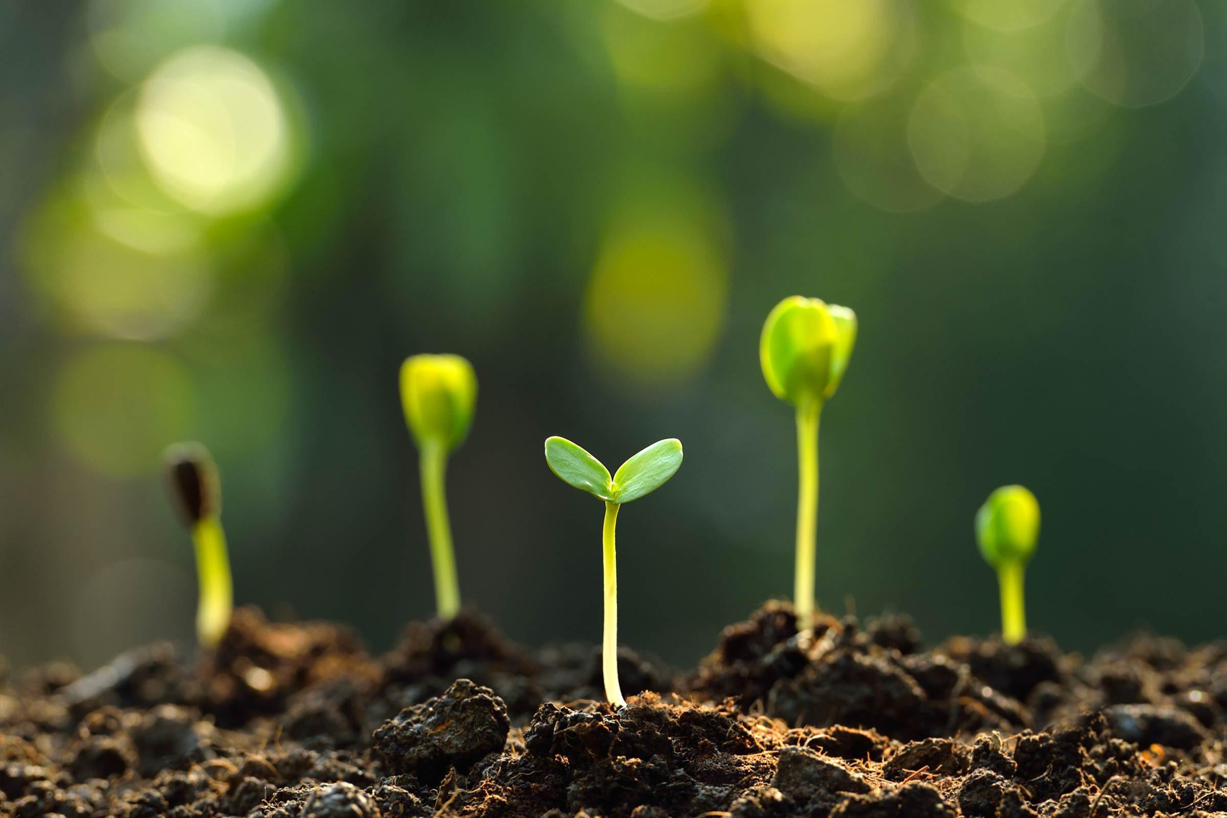 010_Brain_Surprising_Health_benefits_Gardening