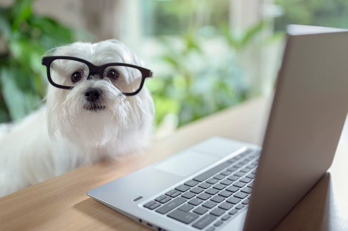 Dog using laptop computer