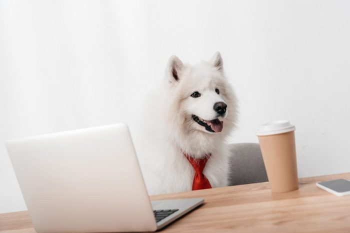 business dog with laptop and paper cup