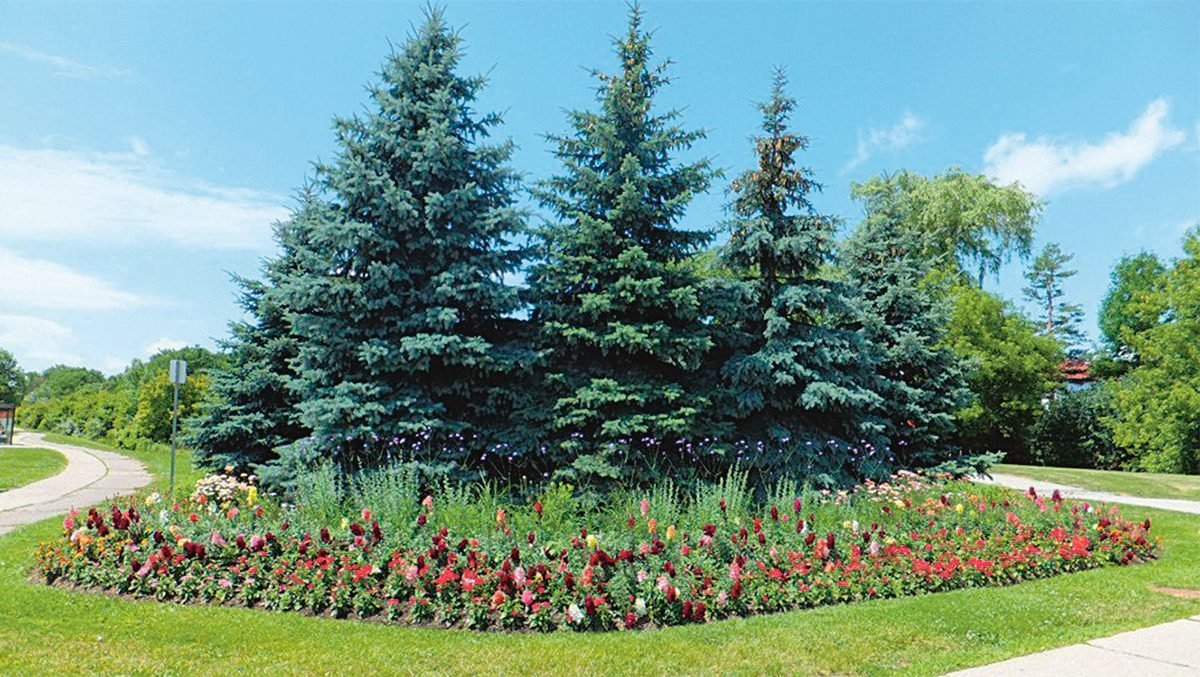 Brampton, Ontario is Canada's Flower Town