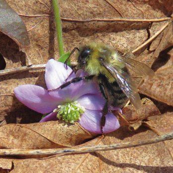 Enjoying Early Spring Blooms in Exeter, Ontario