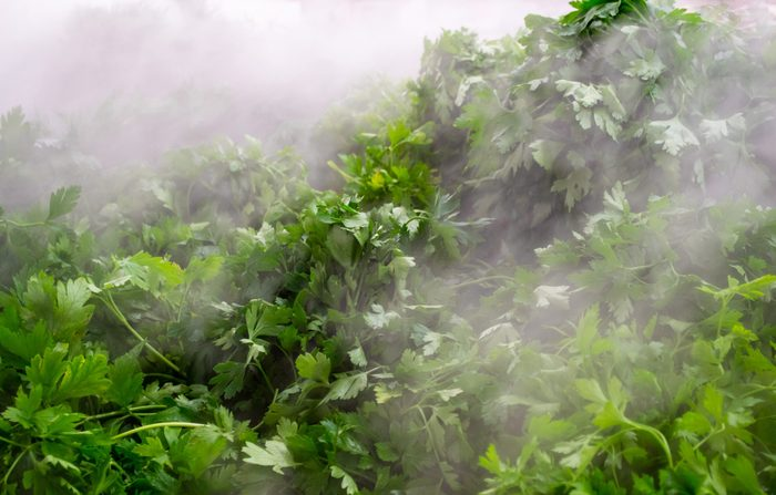Produce section - water misting parsley