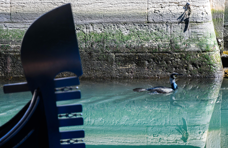 Seabirds in Venice