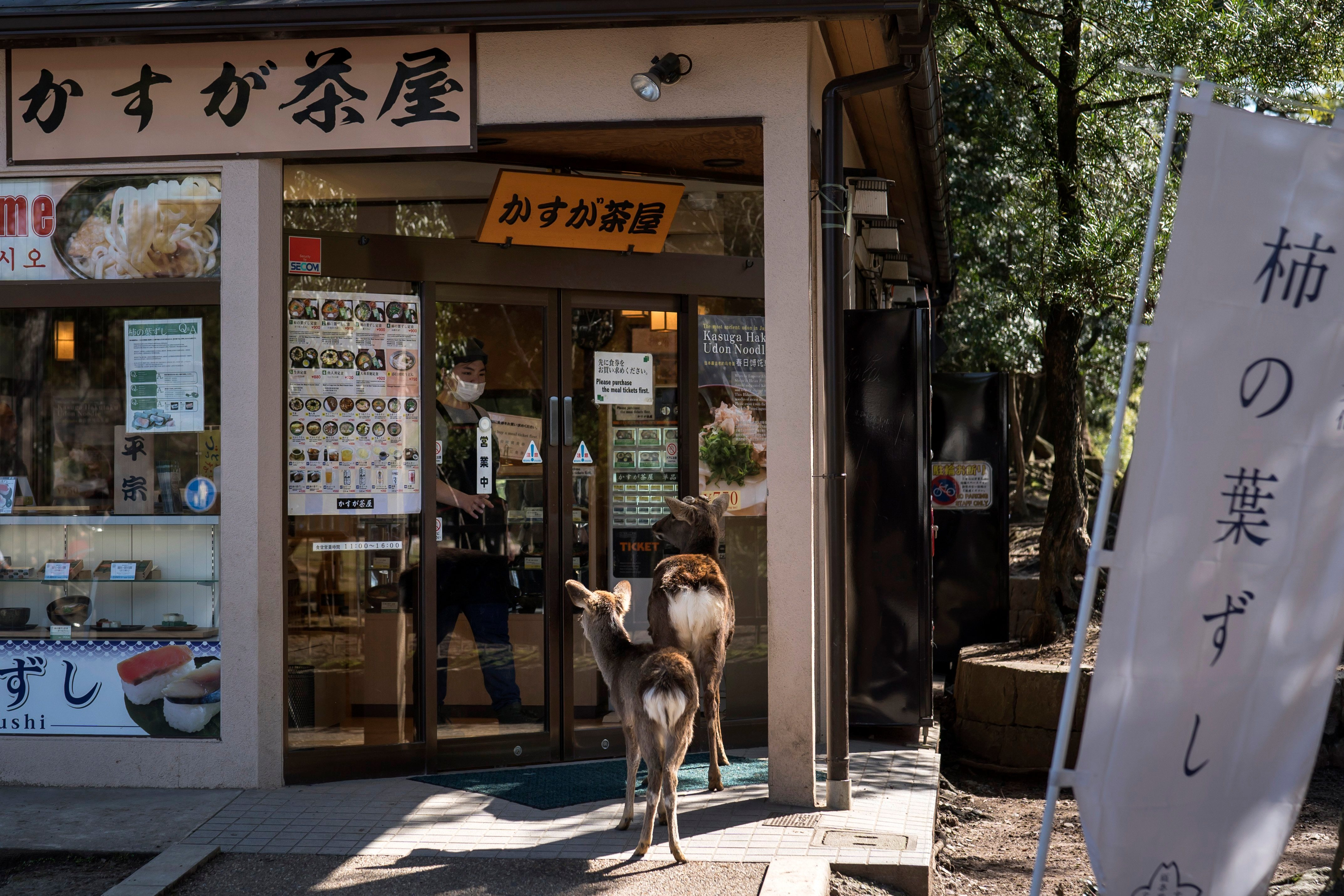 Deer on a street in Nara, Japan