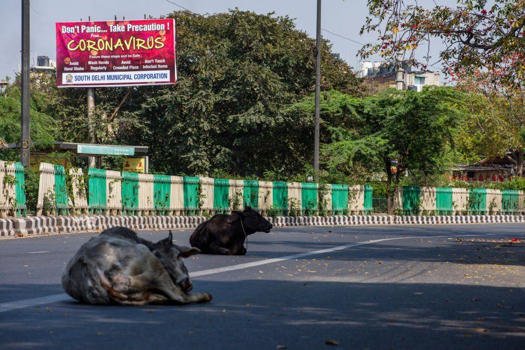 Cows in Delhi during COVID-19 outbreak