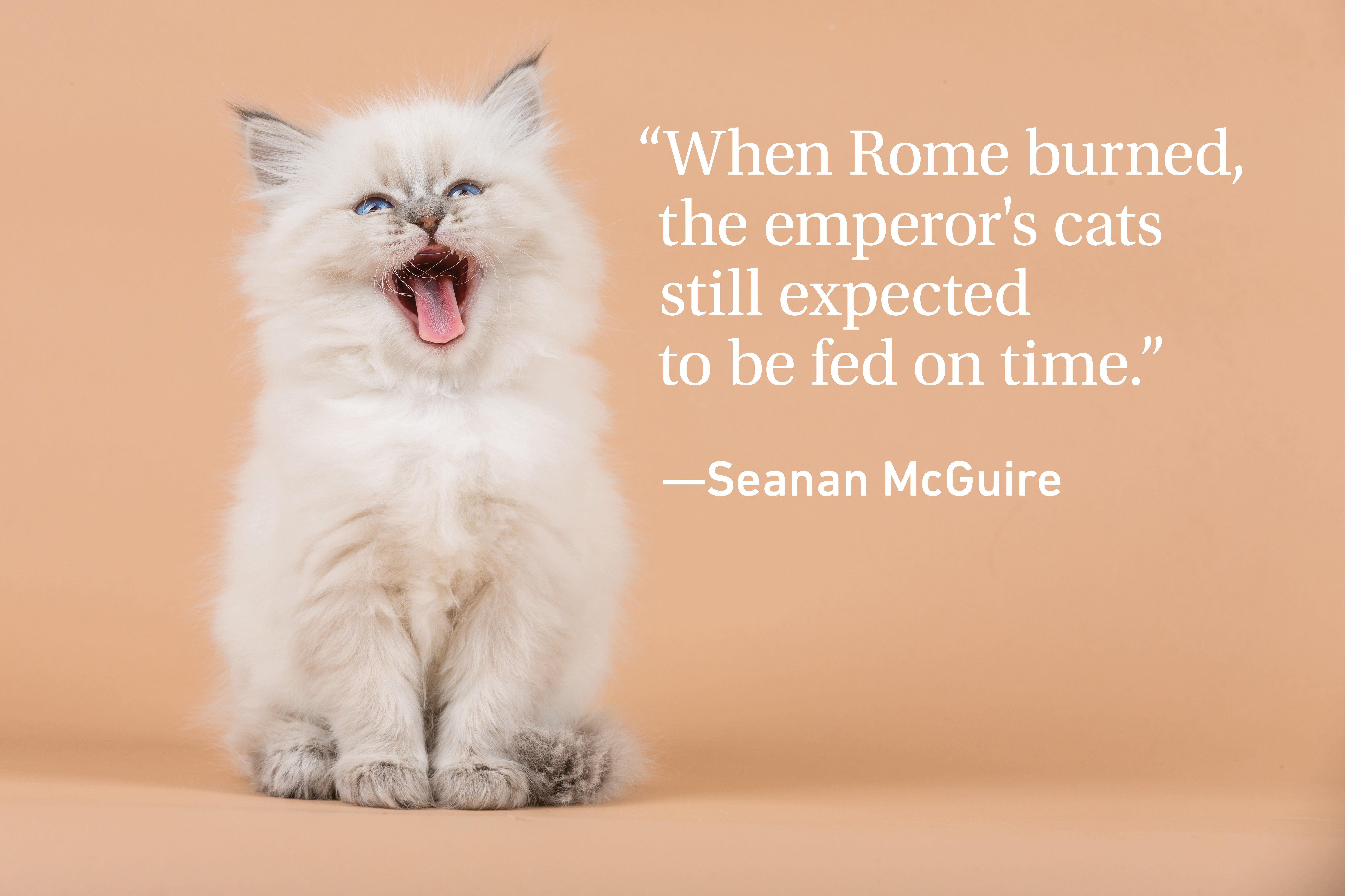 Hungry kitten on orange background with a quote on it
