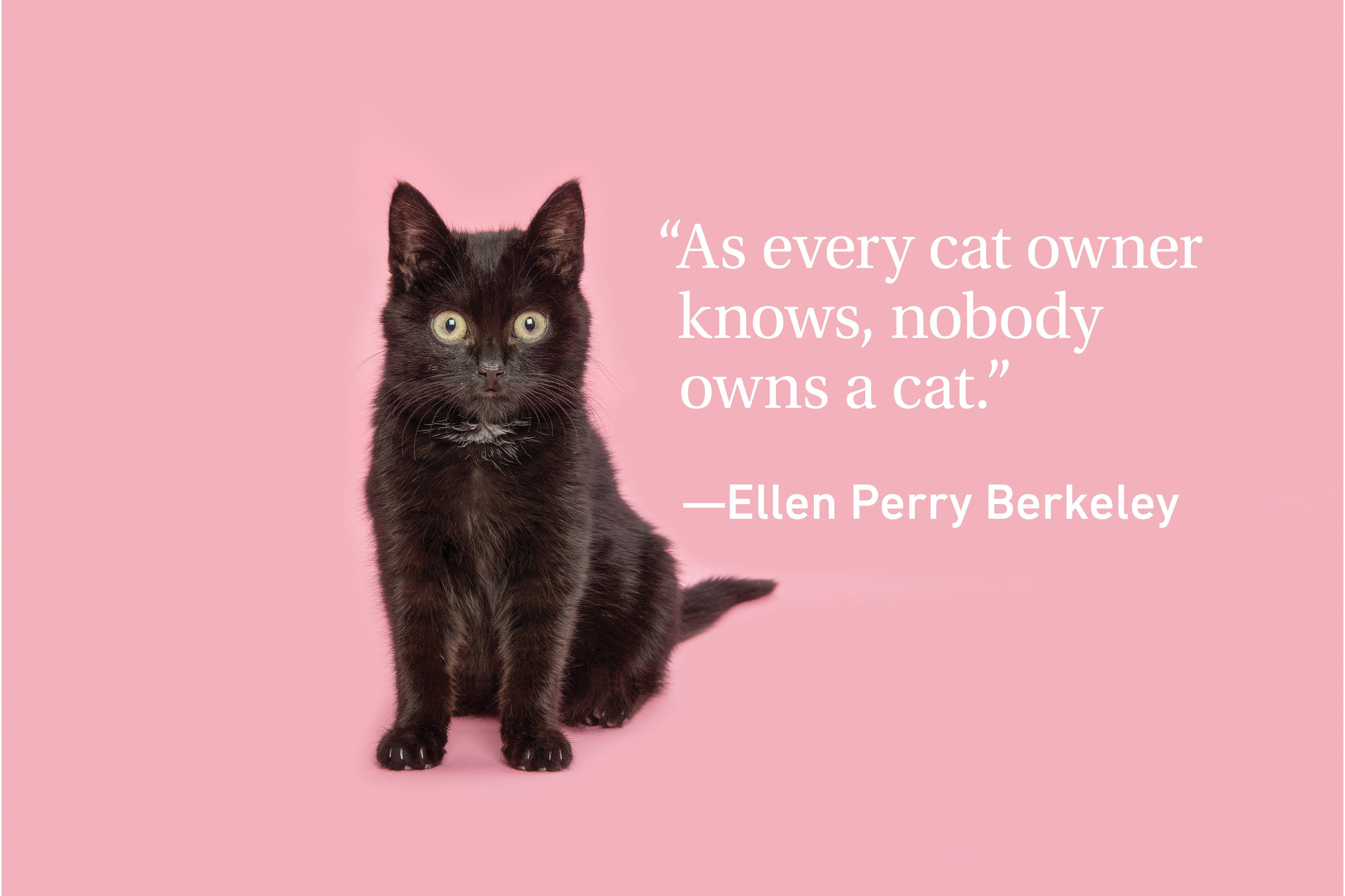Black cat on pink background