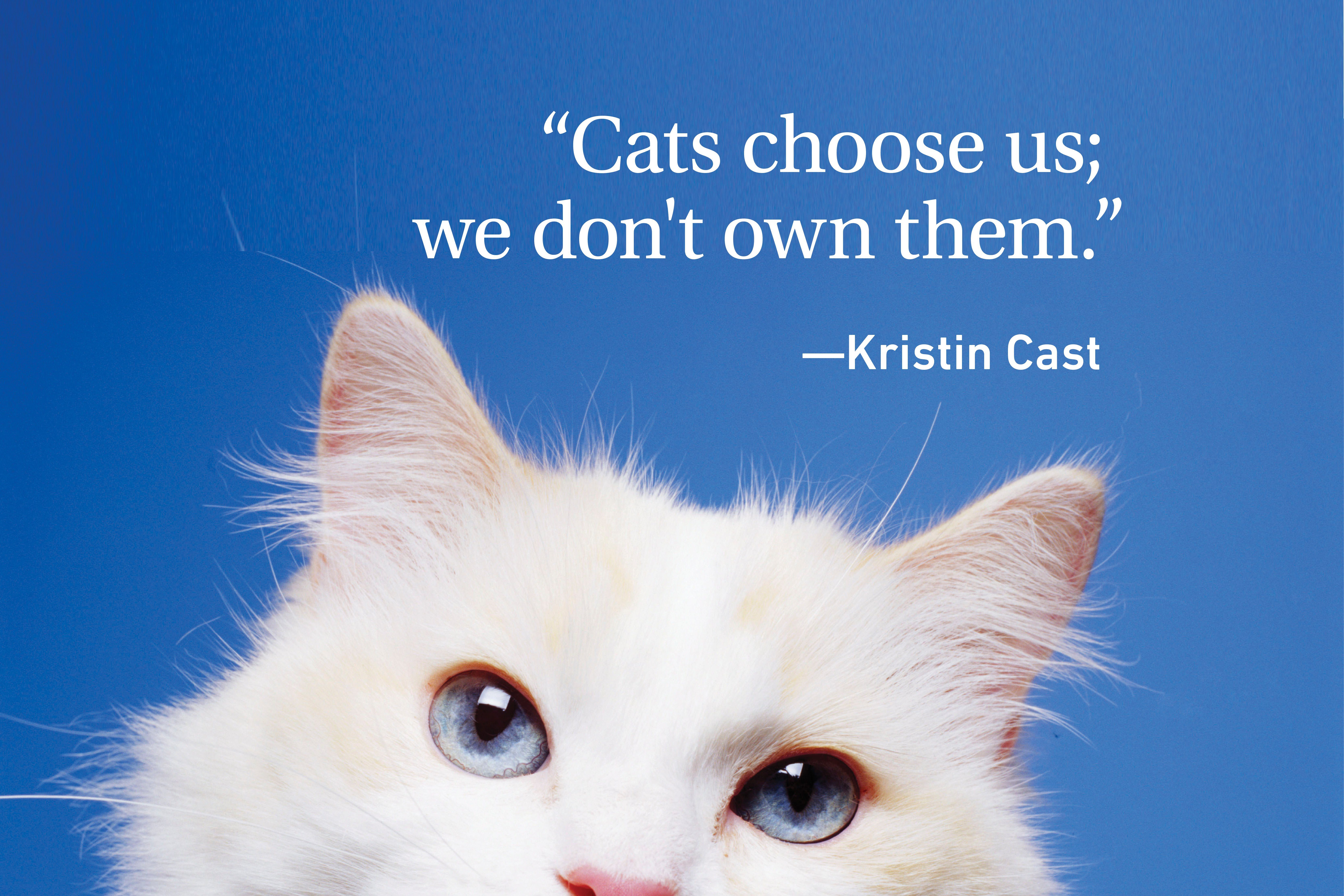 White cat on blue background with quote on cats