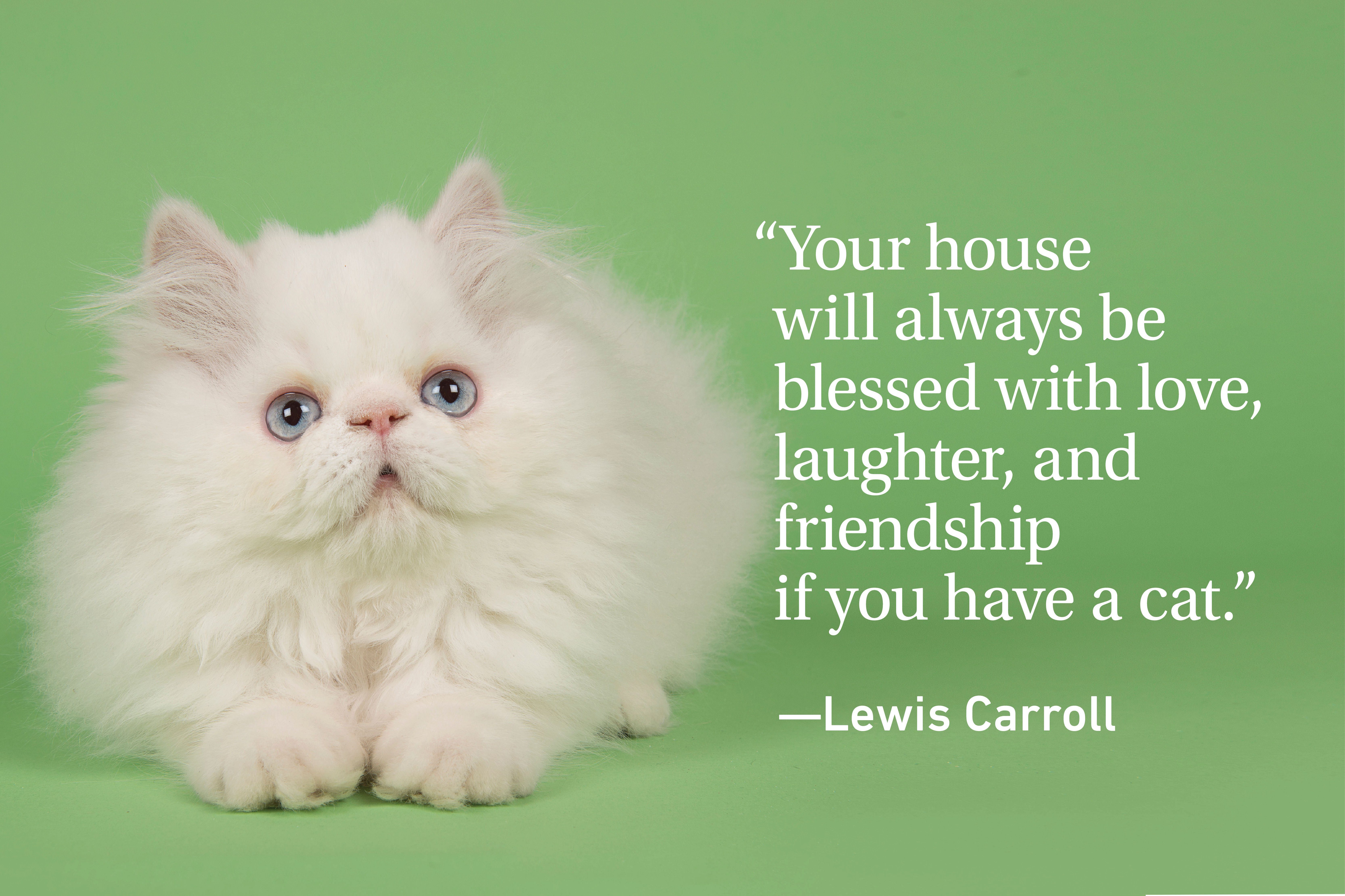 Cat quote on green background with a white cat