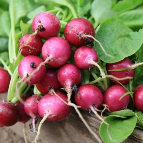 Radishes growing in a garden