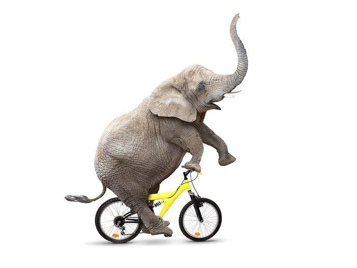 birthday jokes - funny elephant riding bike