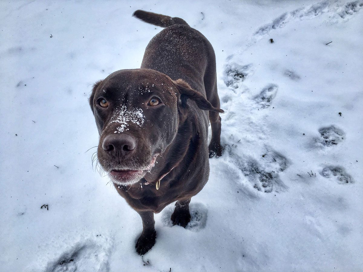Black dog having fun with winter weather