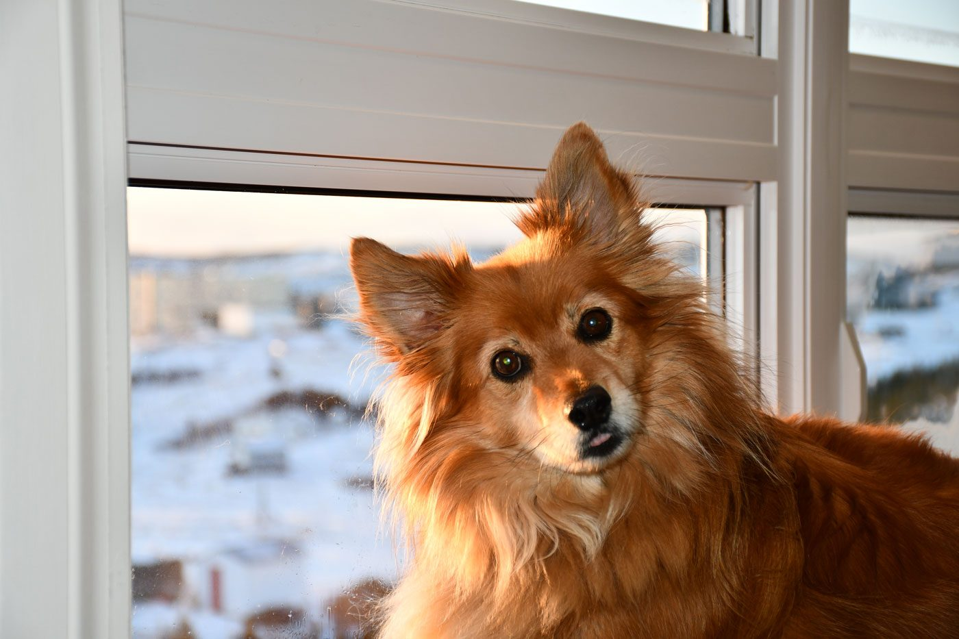 Cute dog posing next to window