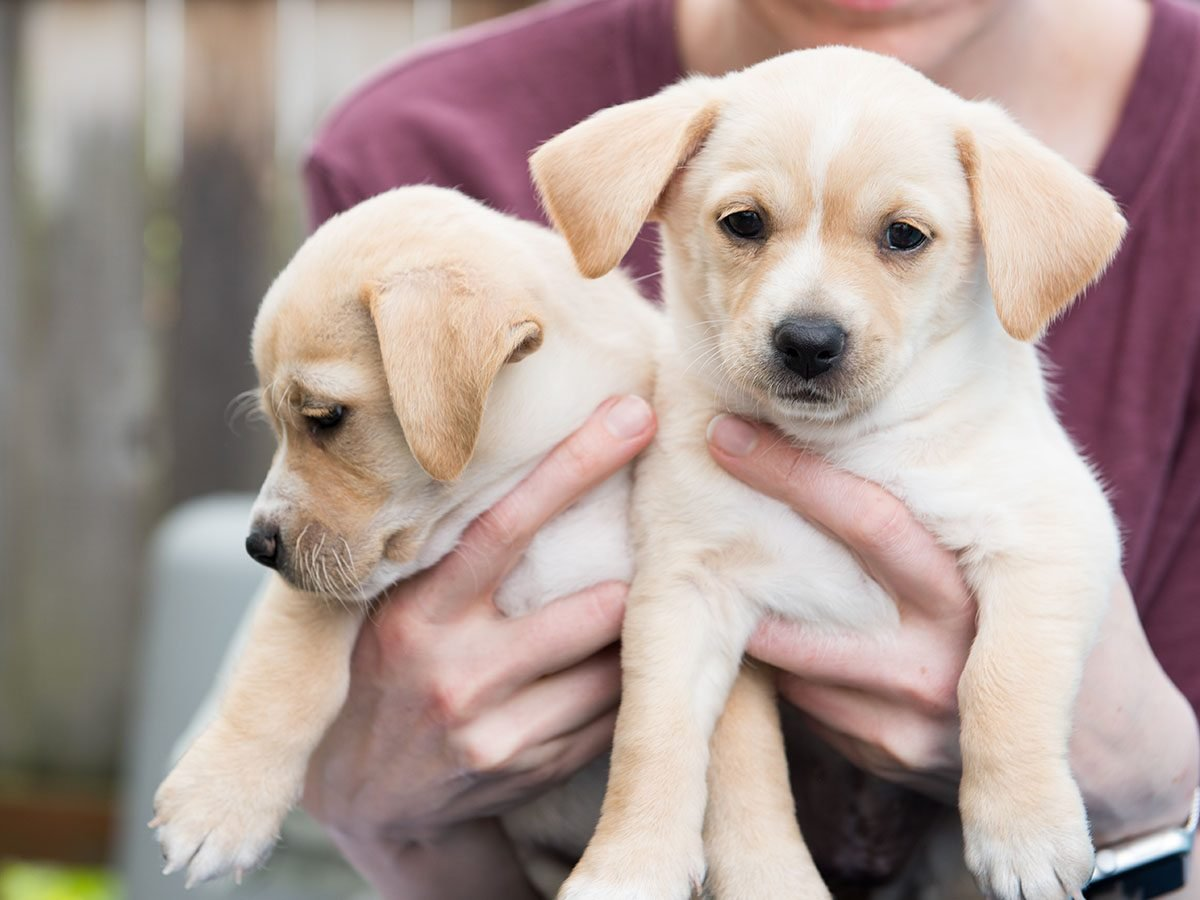 Two puppies being held in hands.