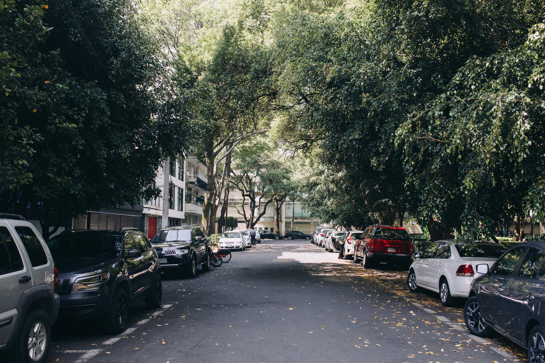 Street lined with cars and trees in Mexico City, Mexico