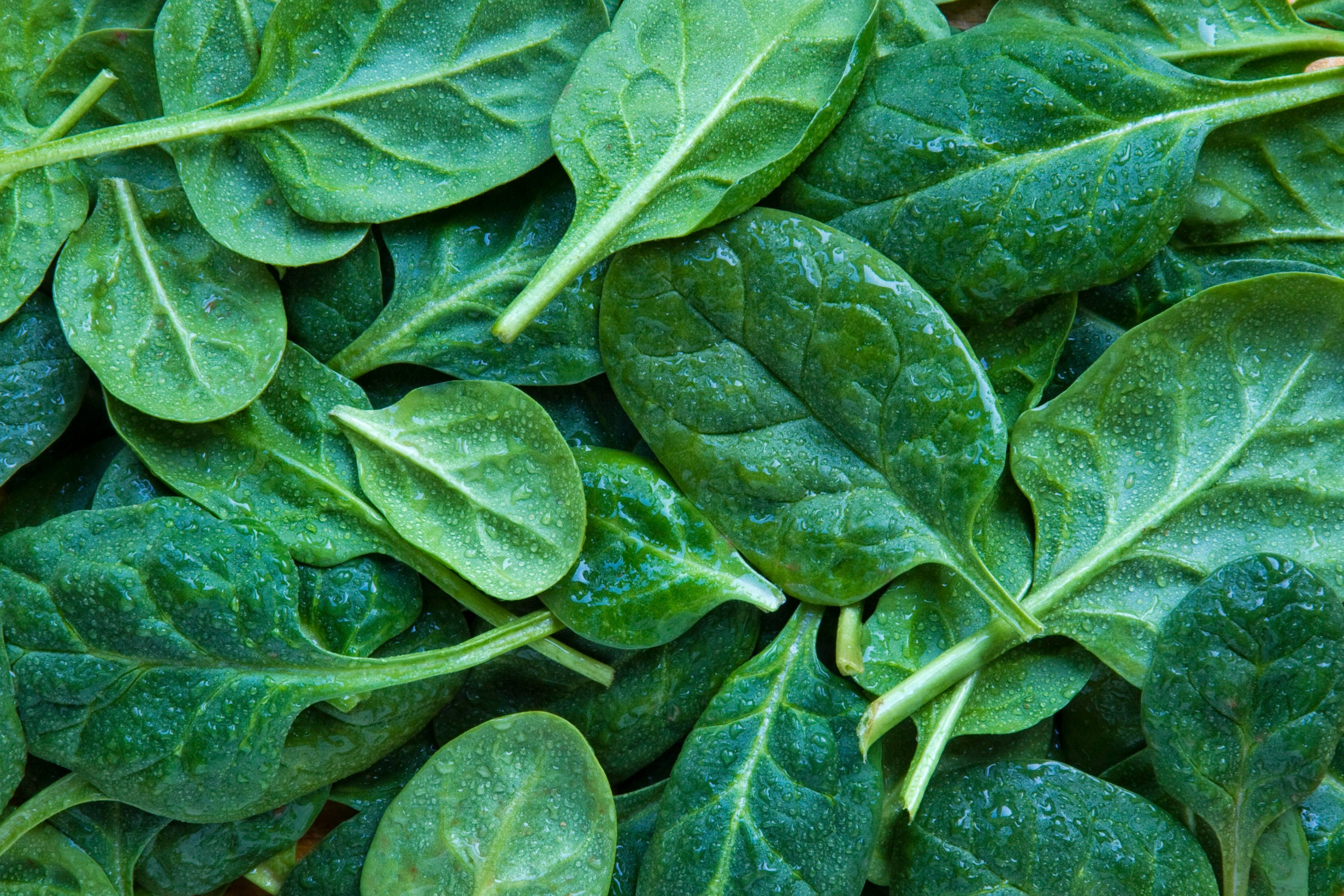 Full frame shot of leaf spinach
