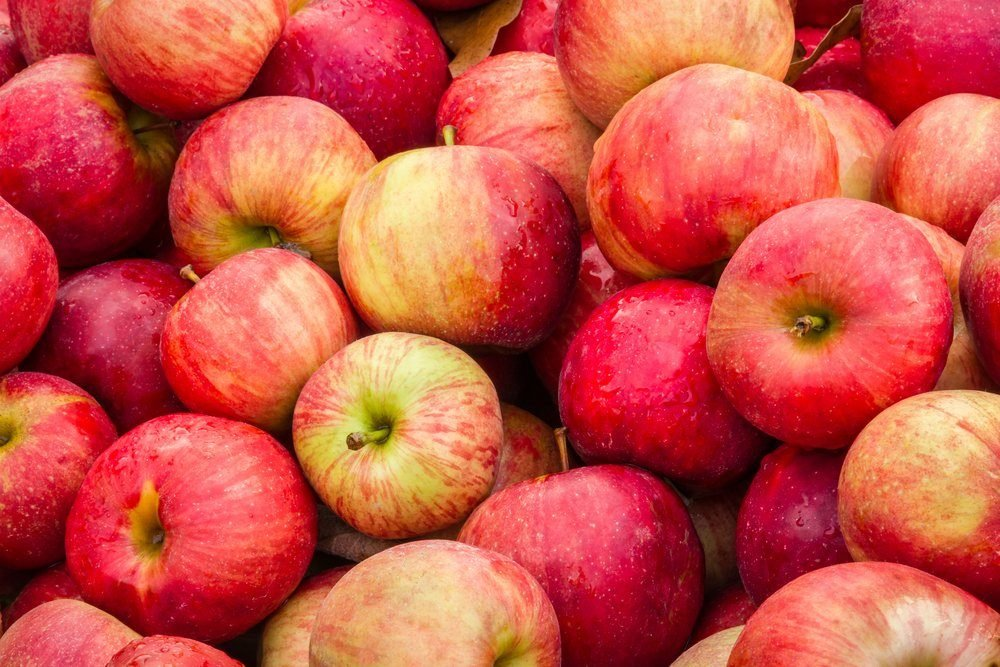 Apples fill a bin at an orchard market at harvest time.