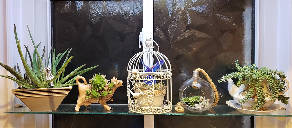 Succulents shelfie