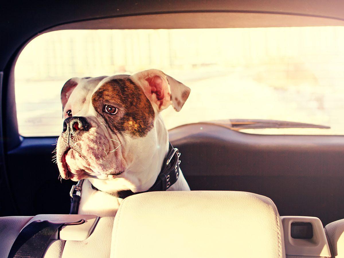 Summer heat - dog in parked car