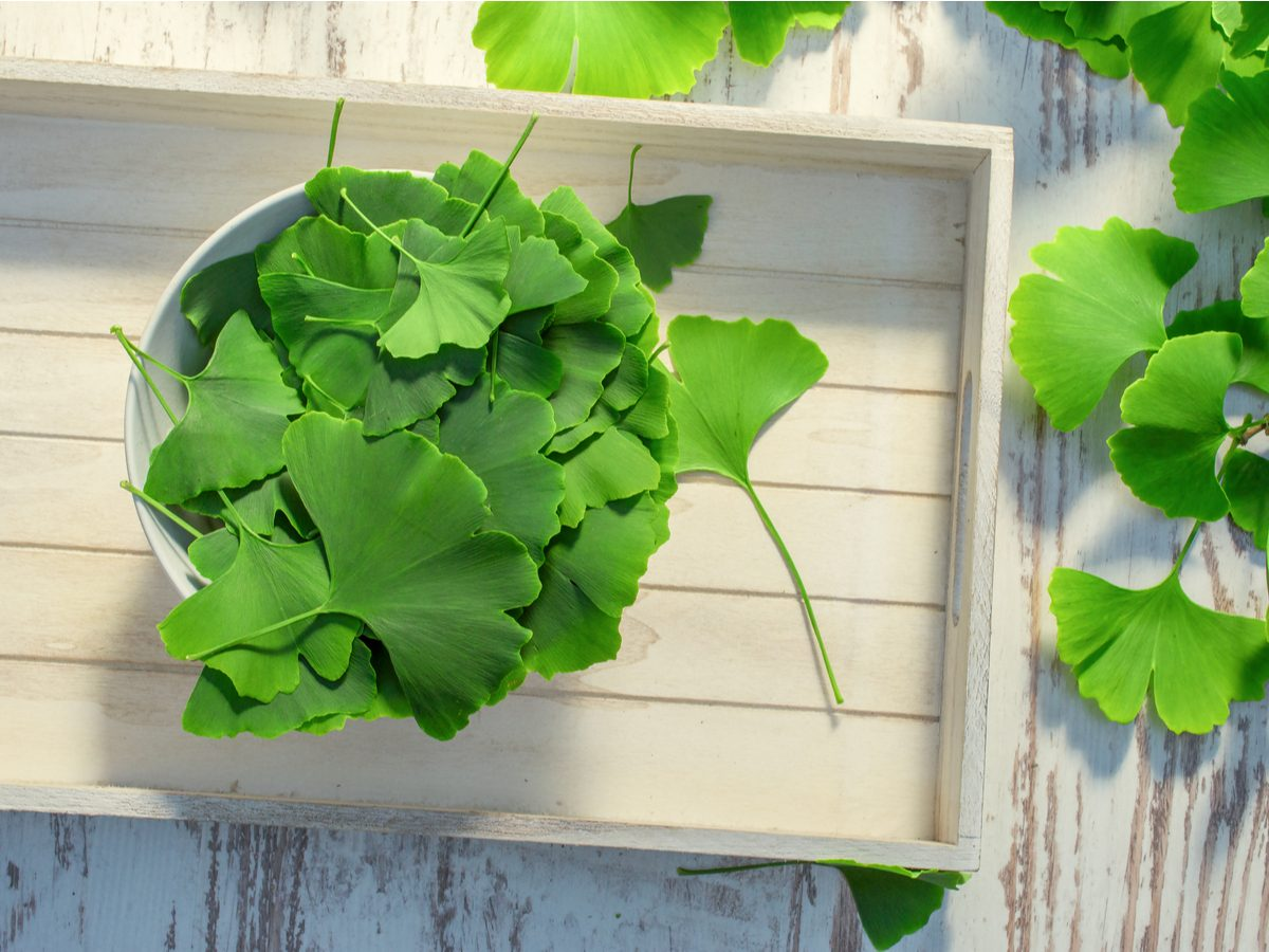 Natural antidepressants - ginkgo biloba