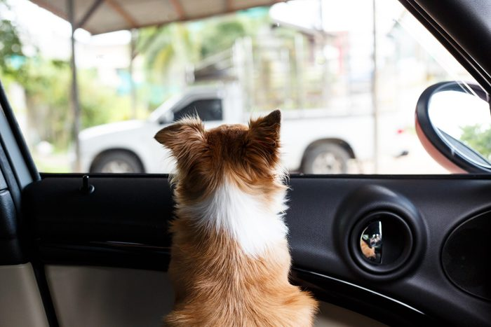 Coping with Summer Heat - Car Dog