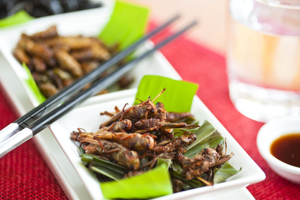 healthy eating tips - bugs