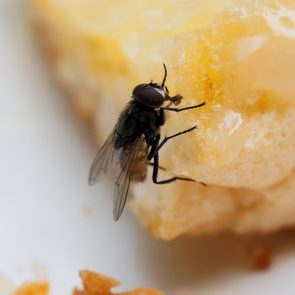 What happens when a fly lands in your food