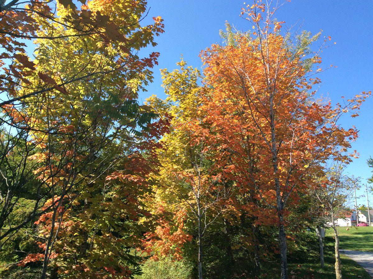 Fall/autumn colours