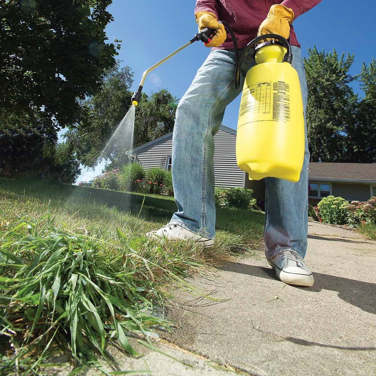 Applying herbicide to weed-infested lawn