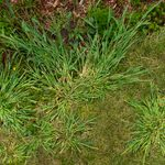 How to Get Rid of Crabgrass: A Step-by-Step Guide