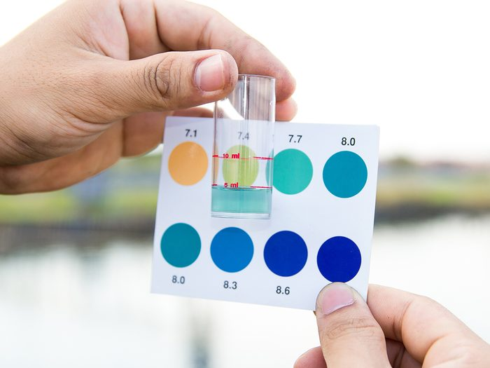 Word power test - Worker use hands holding test tube with pH indicator comparing color to scale from water in shrimp pond