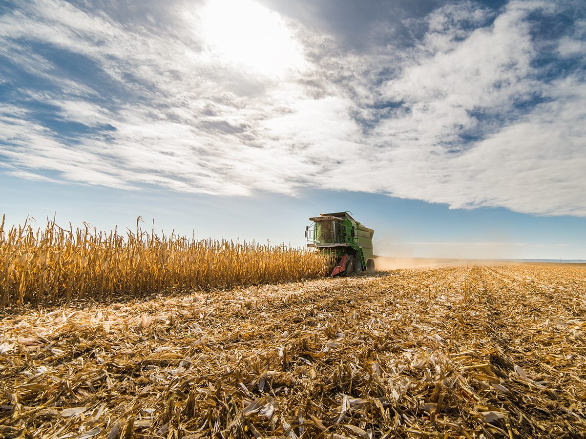 Fall 2020 Canada forecast - combine harvesting corn