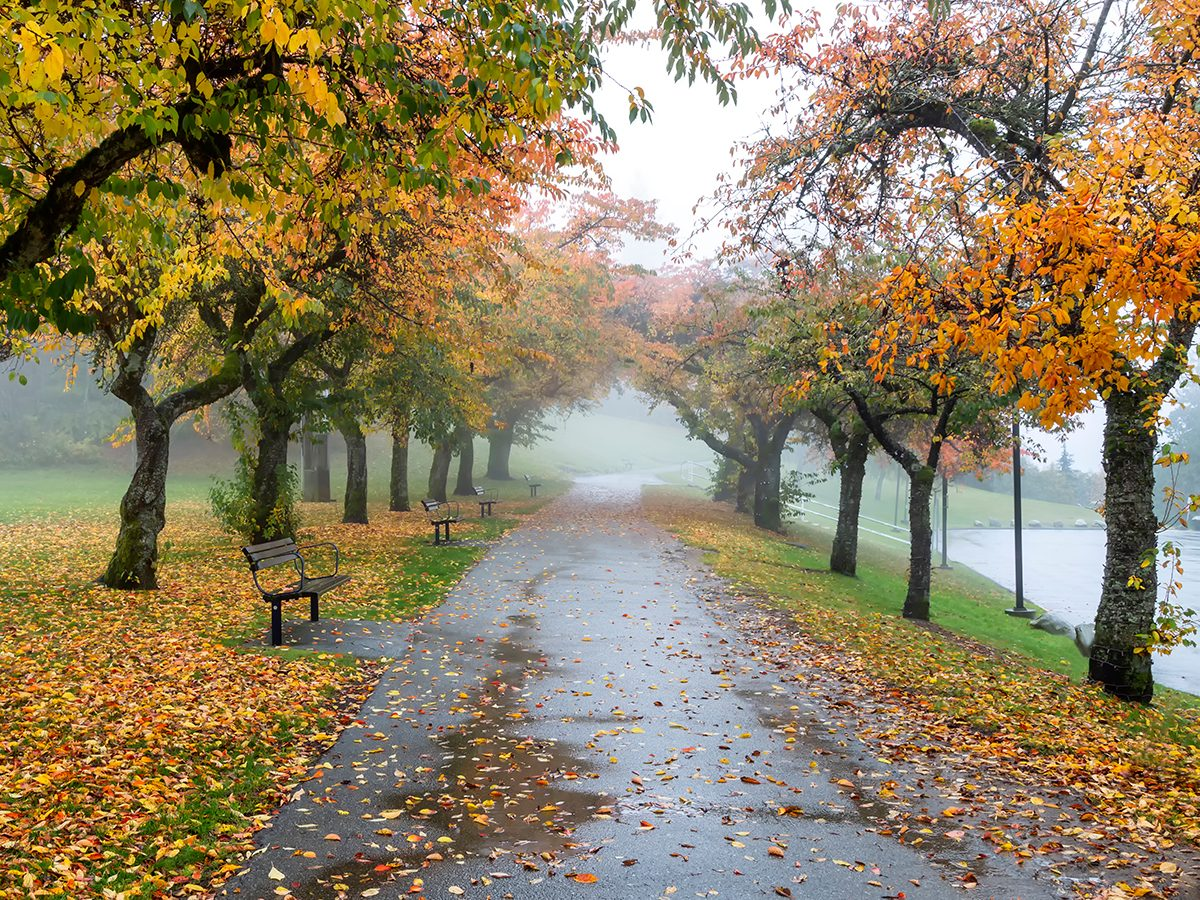 Fall 2020 Canada forecast - Wet and cloudy in BC - Burnaby, B.C.