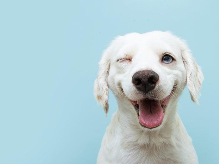 Hilarious tweets - funny dog winking