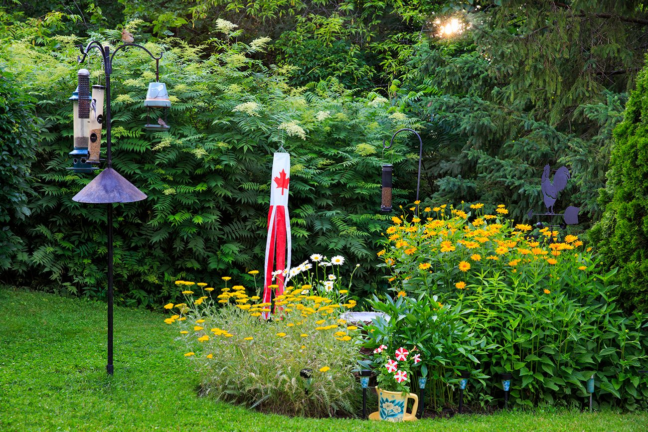 In the backyard photography - Canadian flowerbed