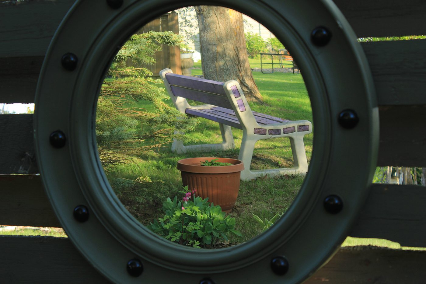 In the backyard photography - garden mirror